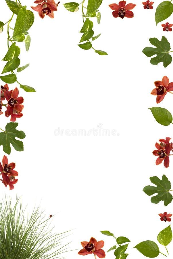 Download Frame stock illustration. Image of card, border, flower - 3366705