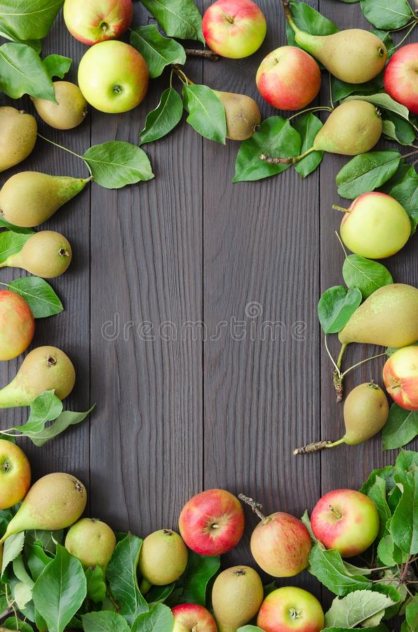 Frame of apples and pears on dark wooden background. Harvest concept. Top view flat lay overhead. Copy space background stock photos