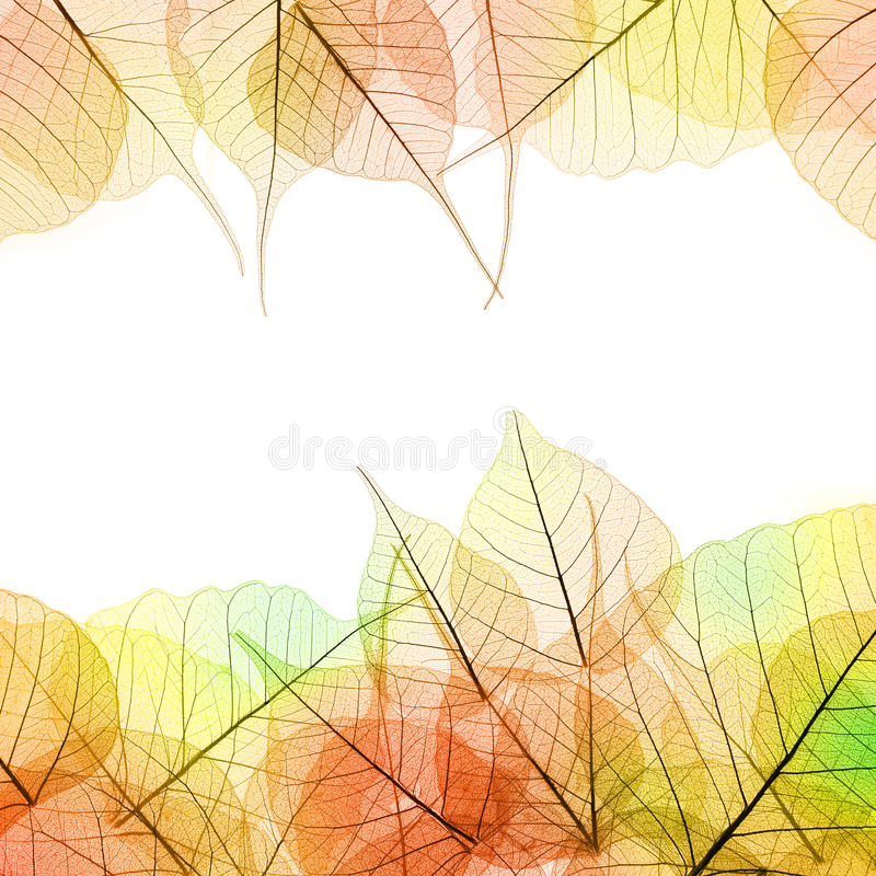 Transparent Autumn Leaves Frame Stock Photo