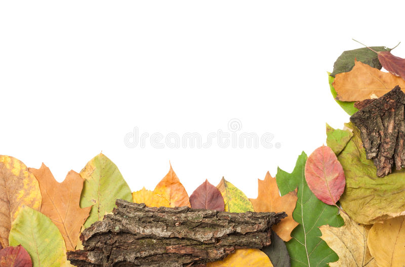 Frame of autumn or fall leaves with bark or rind stock photos