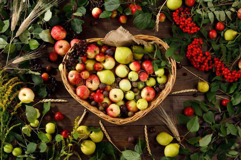 Frame of autumn fruits, apples and pears wooden background. Copy space. Harvest concept. A basket full of fruit stock photos