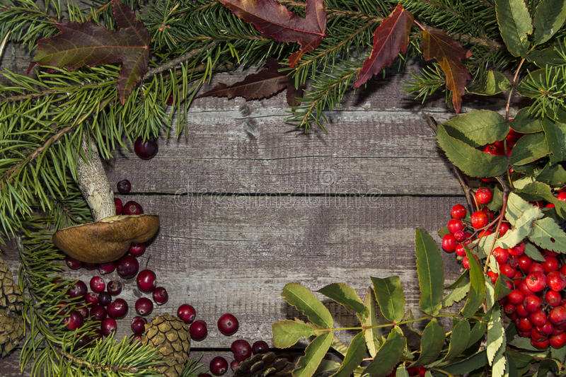 Frame of autumn fruits, mountain ash, cranberries. And leaves stock photography