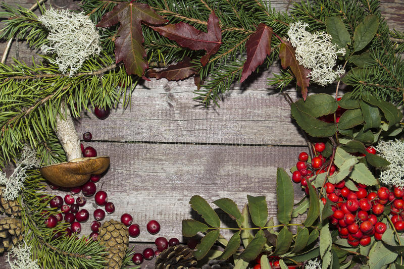 Frame of autumn fruits, mountain ash, cranberries. And leaves stock image
