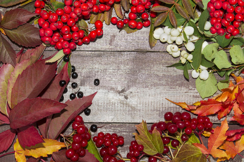 Frame of autumn fruits, mountain ash, viburnum berries. And maple leaves royalty free stock photo