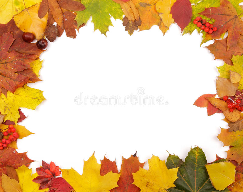 Frame of Autumn Leafs royalty free stock image