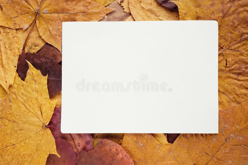 Frame from autumn leaves