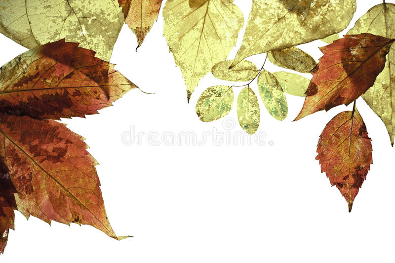 Download Frame With Autumn Leaves Stock Photos - Image: 15919153