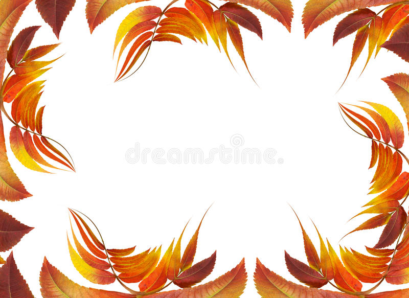 Frame with autumn leaves stock photo