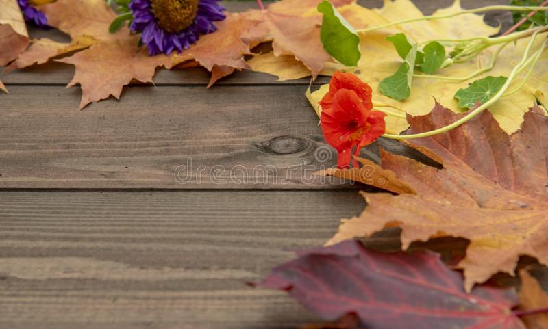Frame and autumn leaves and flowers on wooden background. Free space royalty free stock photography