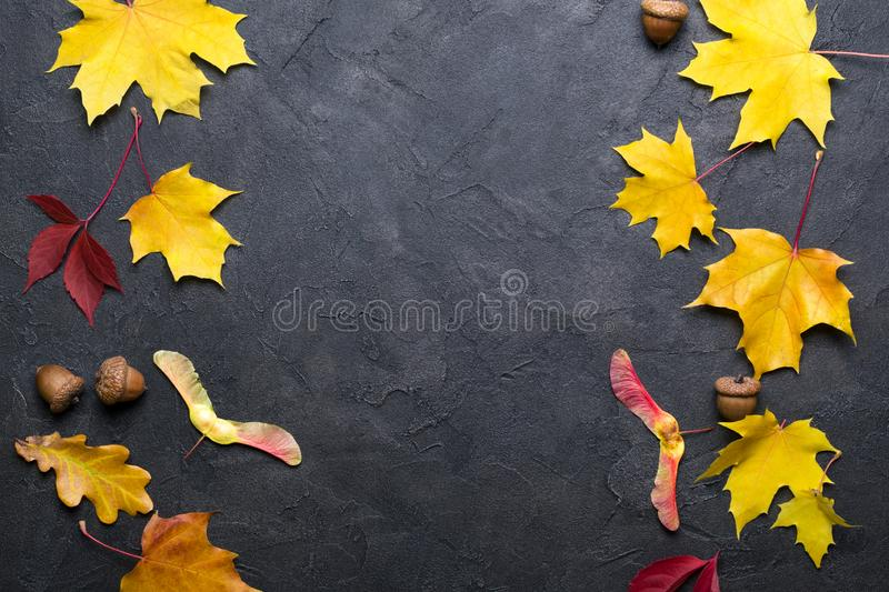 Frame with autumn maple leaves. Nature fall template for design, menu, postcard, banner, ticket, leaflet, poster. On dark backgr. Frame with autumn maple leaves royalty free stock photography