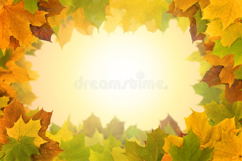 Frame of autumn marple leaves stock images