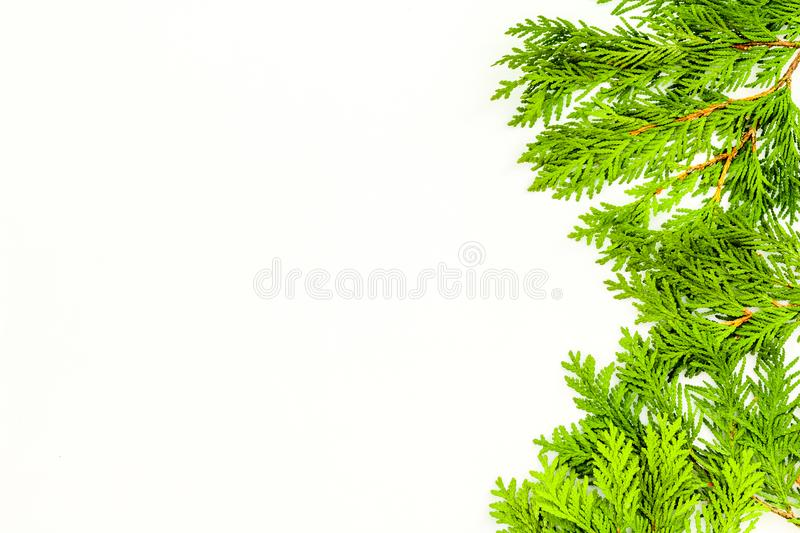 Frame Or Background With Juniper For Image Editing, Image Design ...