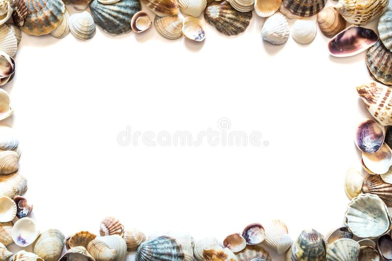 Frame of beautiful different seashells isolated on white background with space for text. Mollusk seashell texture stock images