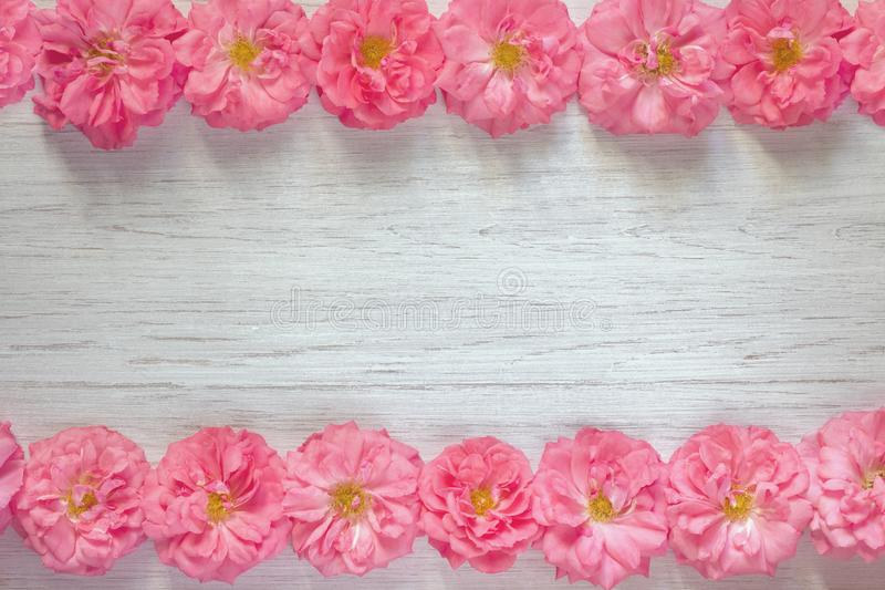 Frame of beautiful pink roses on white wooden background. Flat lay, top view, copy space stock photo