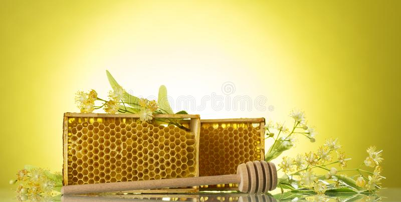 Frame with bee honeycombs, wooden beater and Linden flowers on yellow background royalty free stock images