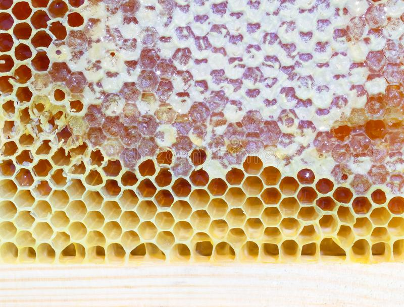Frame with bee honeycombs. Wooden frame with bee honeycombs filled with honey royalty free stock photos