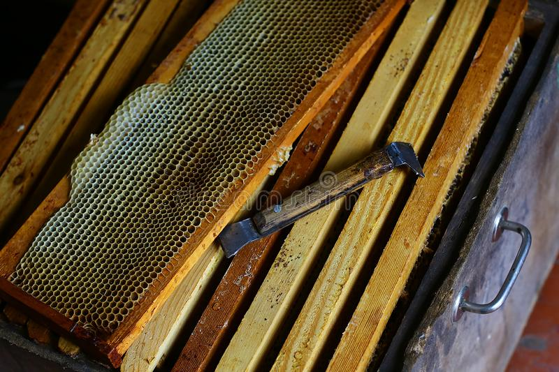 Frame with bees wax structure full of fresh bee honey in honeycombs. Tools for beekeeping and honey accessories. Authentic lifesty royalty free stock photography
