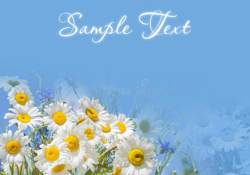 Frame and border with daisies on a blue background royalty free stock images