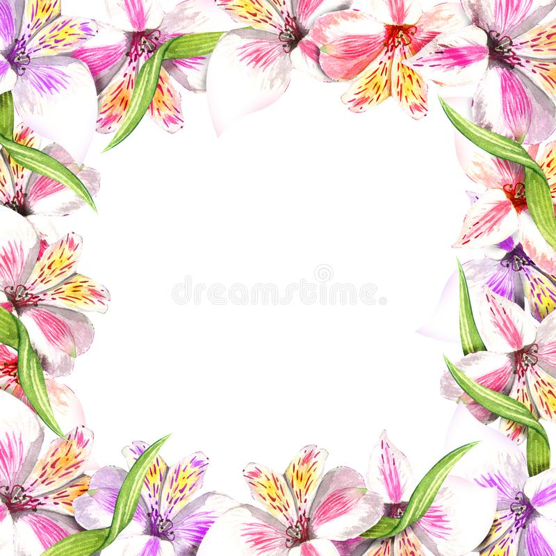 Frame border ornament square. Pink alstroemeria bouquet floral botanical flowers. Wild spring leaf wildflower. Violet alstroemeria bouquet floral botanical vector illustration