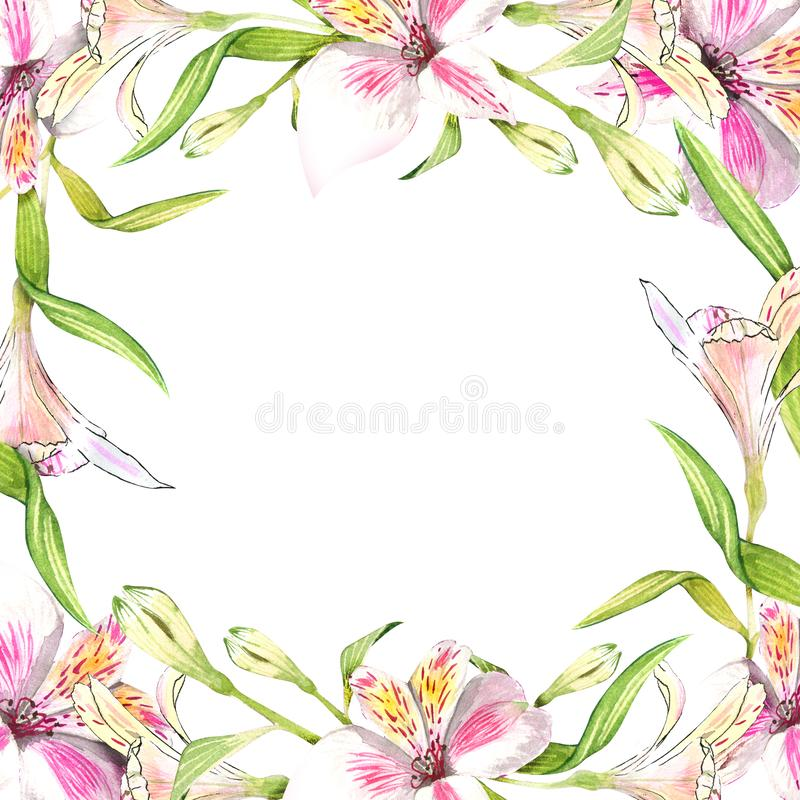 Frame border ornament square. Pink alstroemeria bouquet floral botanical flowers. Wild spring leaf wildflower. Violet alstroemeria bouquet floral botanical royalty free illustration