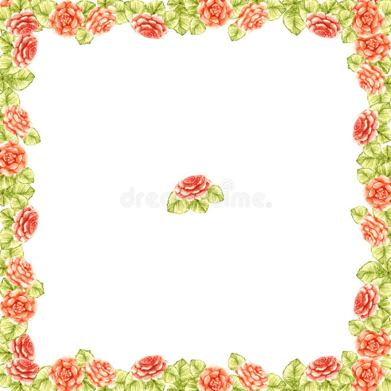 Frame border of peach cute orange delicate roses with green leaves square garden beautiful light pattern isolated on white backgro. Frame border of peach orange stock illustration