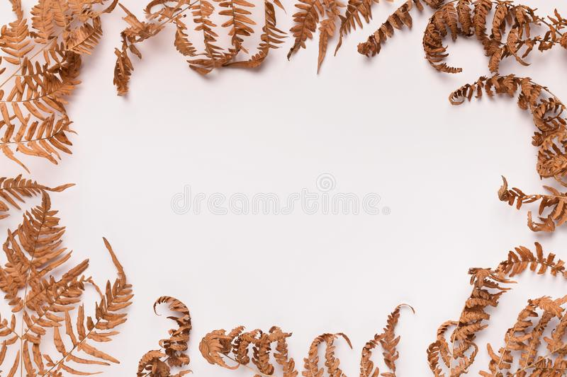 Frame with borders of autumn brown fallen leaves on white stock images