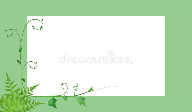 Frame borders and creative layouts are made from twisted tropical leaves, isolated on white background, concept back to nature, sa. The unique top of the leaf royalty free illustration