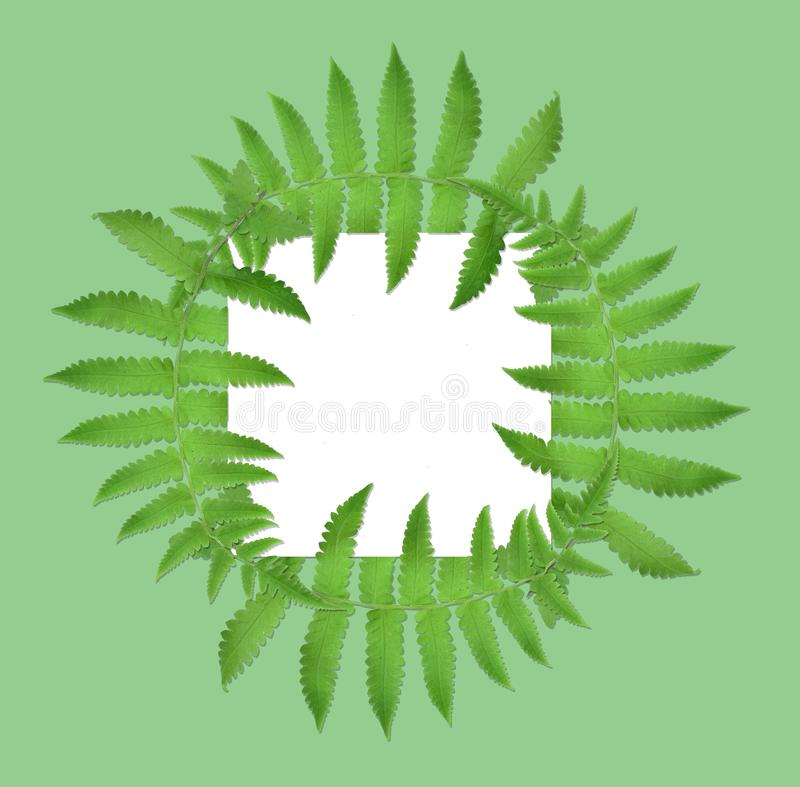 Frame borders and creative layouts are made from twisted tropical leaves, isolated on white background, concept back to nature, sa. The unique top of the leaf stock illustration