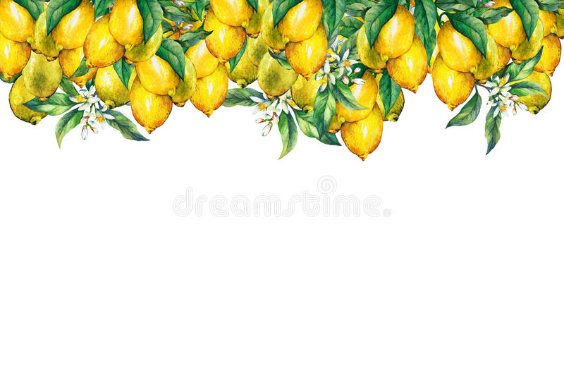 The frame of the branches of fresh citrus fruit lemons with green leaves and flowers. stock illustration