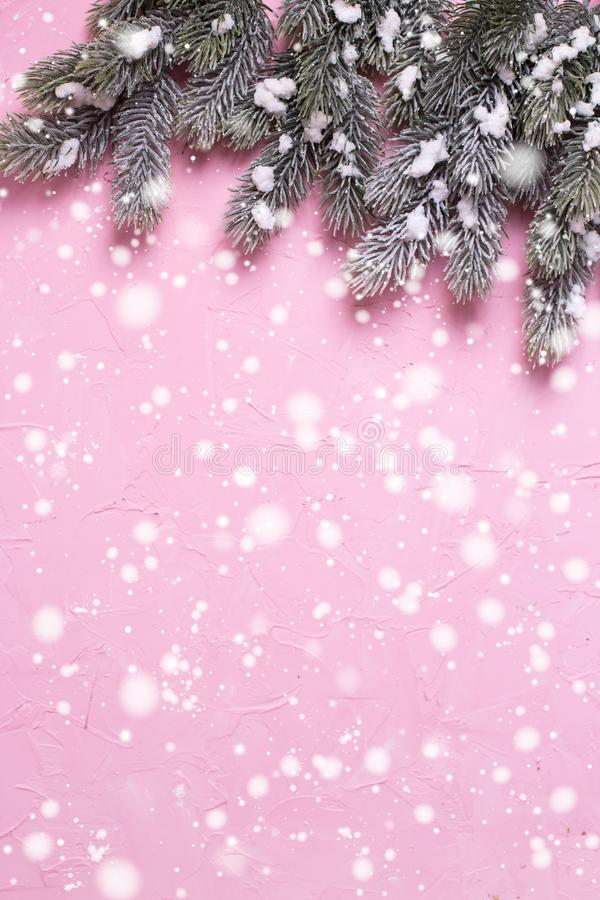 Frame from branches fur tree on pink textured background. royalty free stock photography