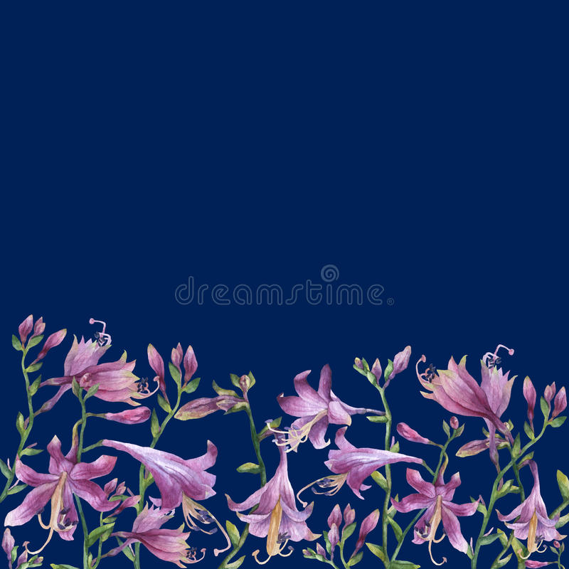 The frame of the branches with purple hosta flower. Lilies. Hosta ventricosa minor, asparagaceae family. royalty free illustration
