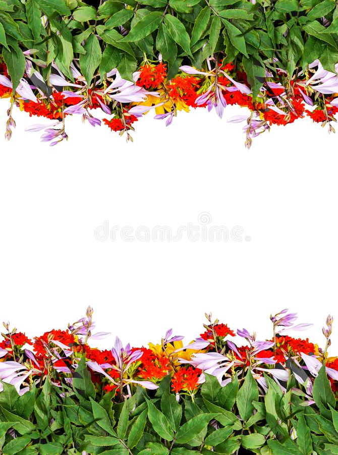 Frame of bright summer flowers on black background. Festive floral template. Greeting card design. Top view. Frame of fresh bright summer flowers on white royalty free stock photography
