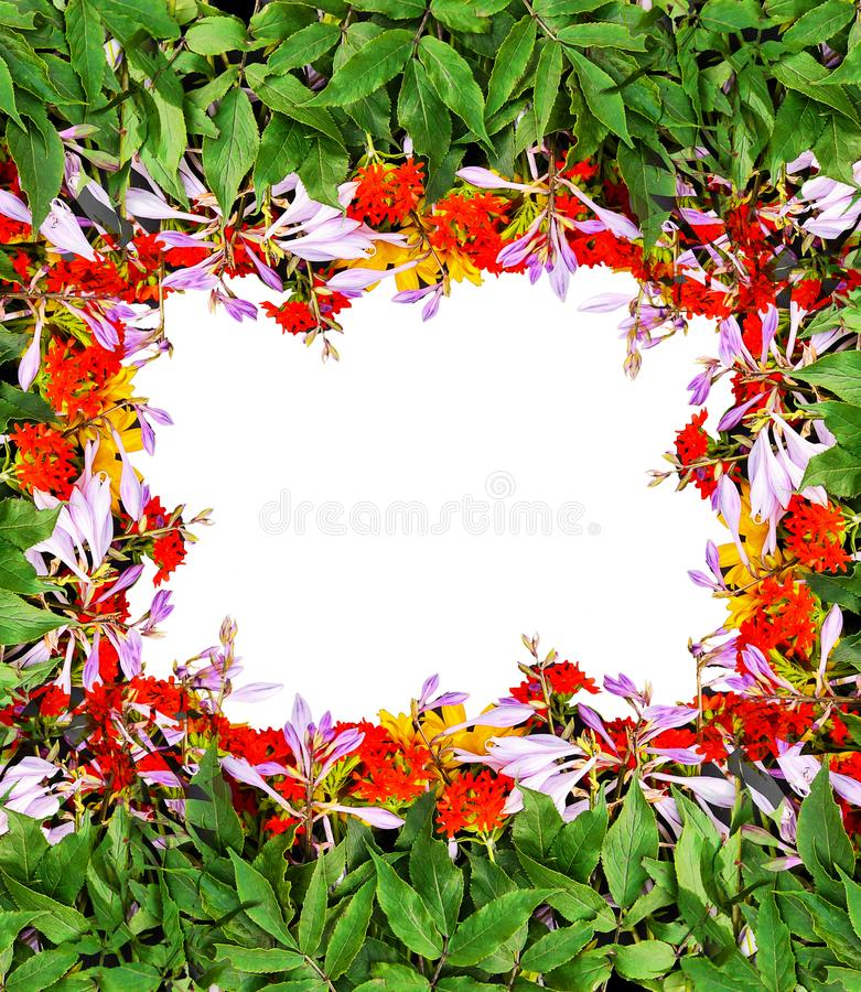 Frame of bright summer flowers on black background. Festive floral template. Greeting card design. Top view. Frame of fresh bright summer flowers on white stock photography