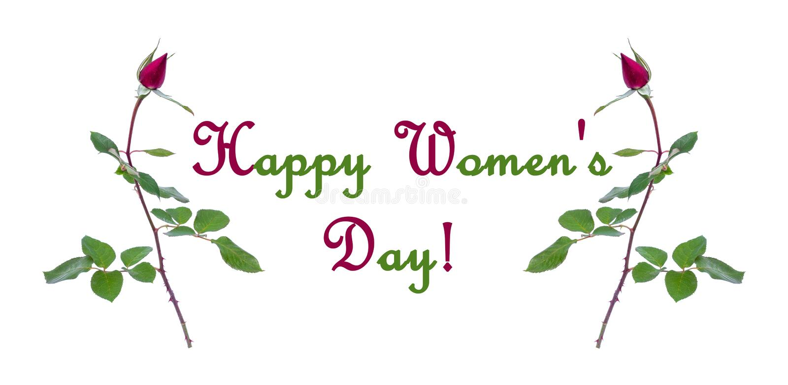 Frame of Burgundy rose buds isolated on white background with words Happy womens day stock image