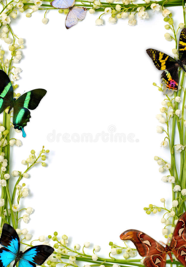 Frame With Butterflies. Lilies of the valley flower frames with colorful butterflies on white background royalty free stock photos