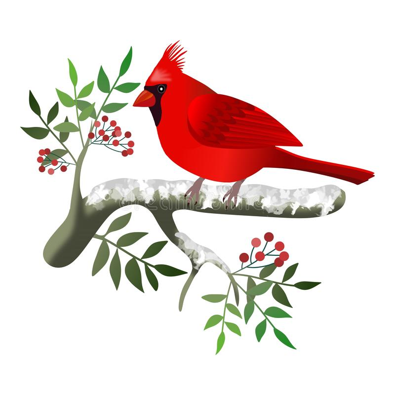 Frame with cardinal bird on branches with berries. Illustration. stock illustration