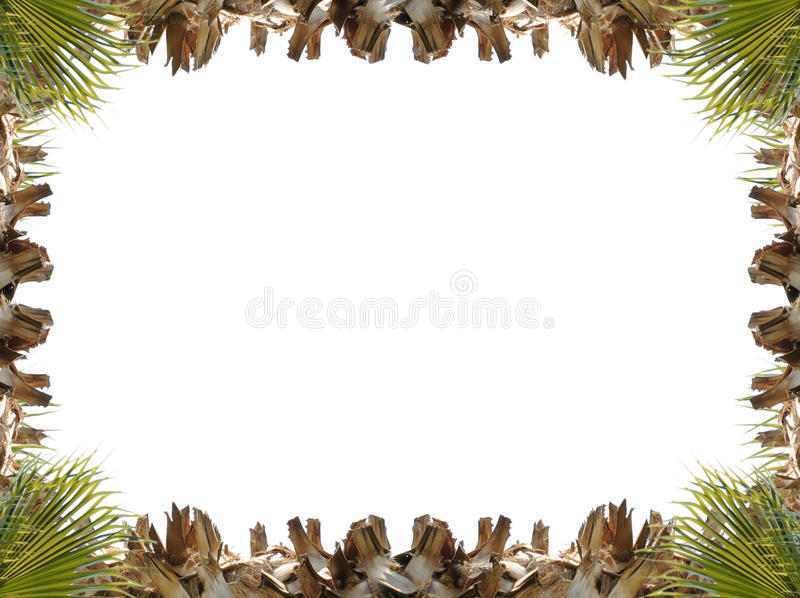Frame of the climbing plant isolated on stock photo