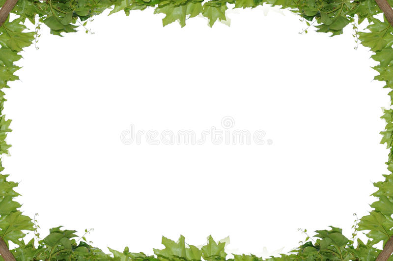 Frame of the climbing plant isolated on royalty free stock photos