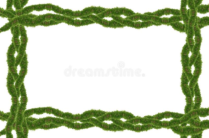Frame of the climbing plant isolated on stock image