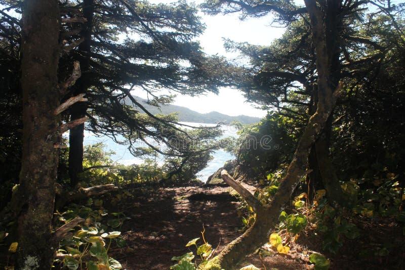 Frame Coastal trees Rainforest clearcut pristine stock image