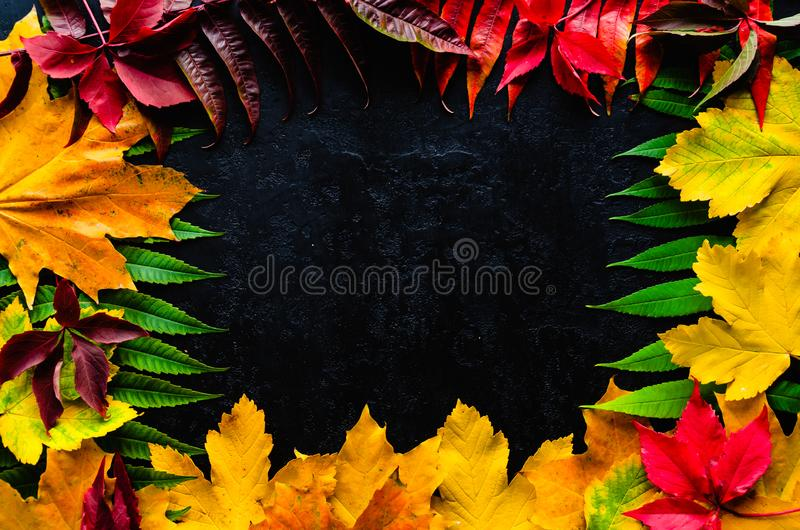 Frame of colorful autumn leaves on a black background. Autumn composition. Flat lay, top view, copy space royalty free stock image