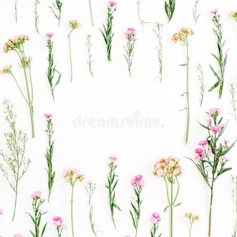 Frame with colorful wildflowers, green leaves, branches on white background stock photos