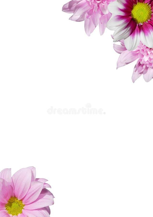 Frame cor-de-rosa das flores. fotos de stock