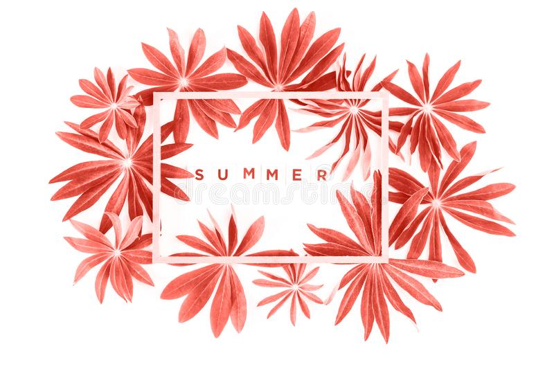 Frame of coral exotic leaves frame with summer word isolated. Exotic trendy coral lupin leaves with wooden frame or border and word summer isolated on white stock image