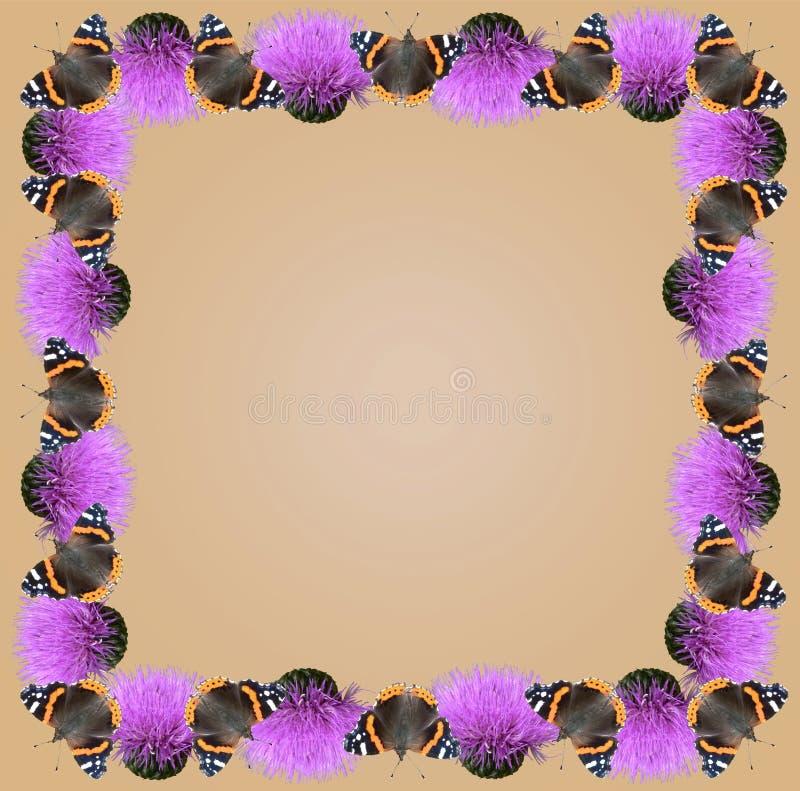Frame da borboleta fotos de stock royalty free