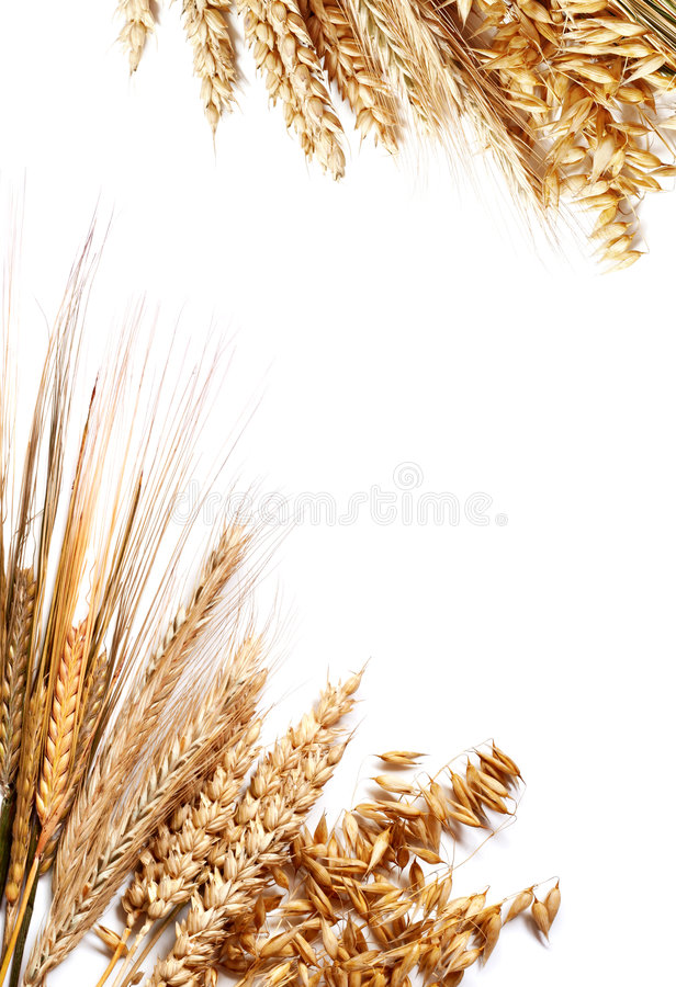 Frame da colheita imagem de stock royalty free