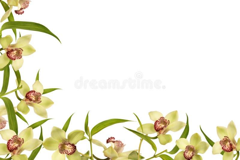 Frame da flor da orquídea imagem de stock royalty free