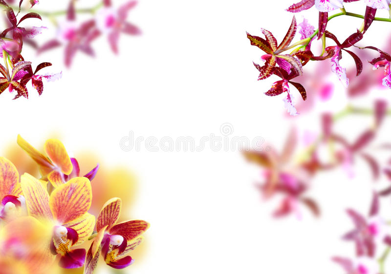 Frame da orquídea fotografia de stock royalty free