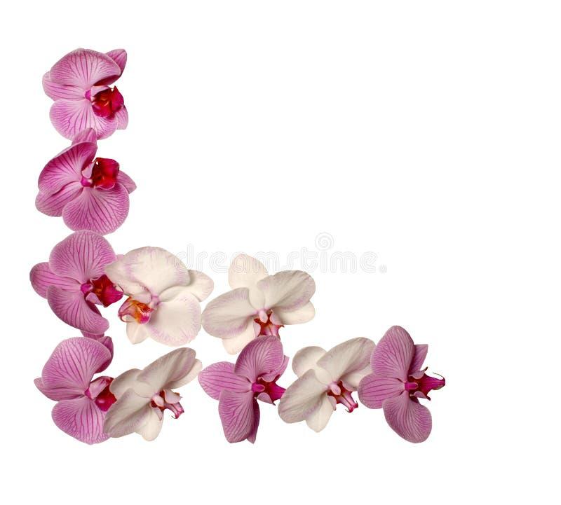 Frame da orquídea imagem de stock royalty free