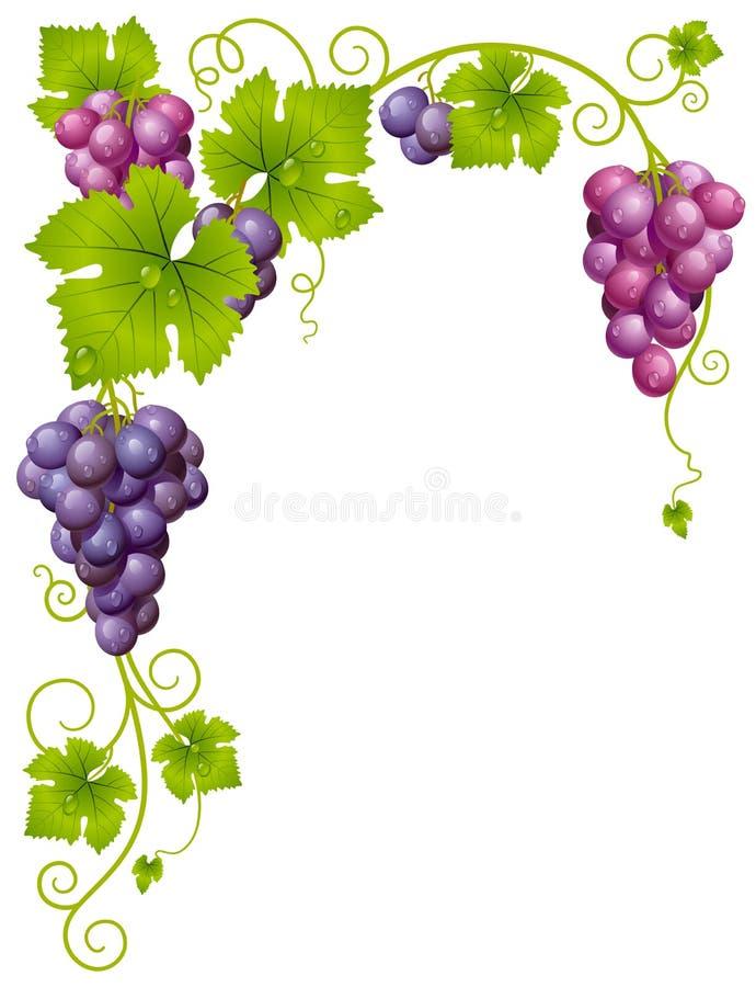Frame da uva do vetor ilustração stock